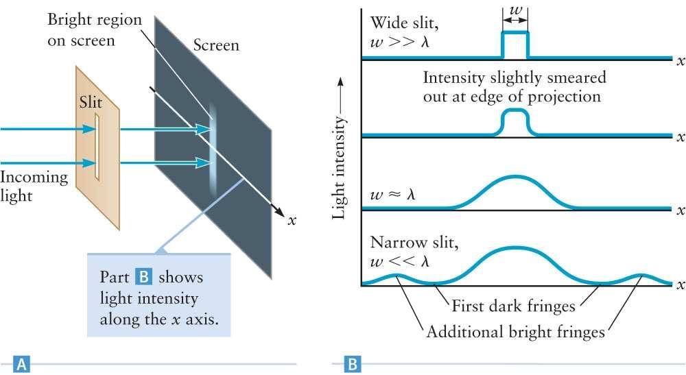 Young Light Through a Single Slit Light passes through a slit or opening and illuminates a screen: As the width of the slit