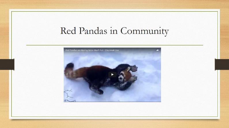 NOW YOU TRY: On the furth slide f the presentatin, insert a vide f cute little red pandas.